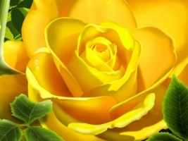 3d yellow rose wallpaper 3d models 3d wallpaper 57