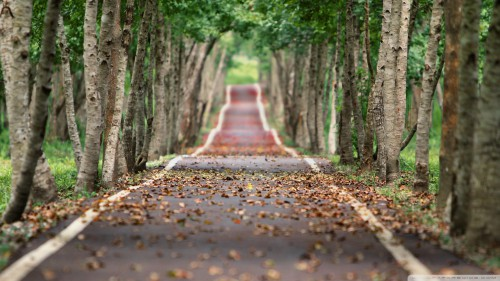 tree lined road wallpaper 1920x1080