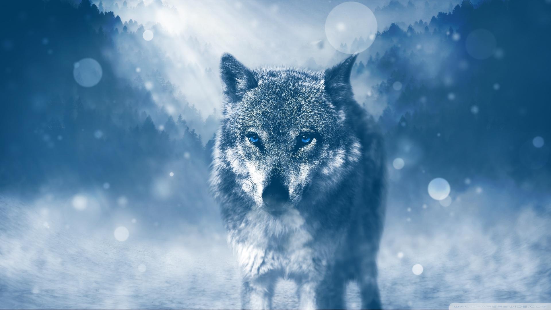 Wolf Winter Wallpaper 1920x1080 Tiny Pix
